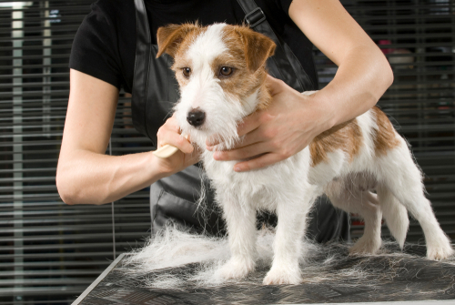 Why Hire Professional Dog Grooming Service?