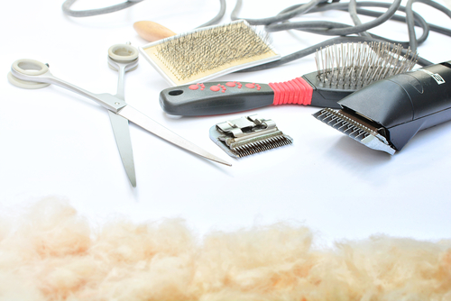 Why Hire Professional Cat Grooming Services?