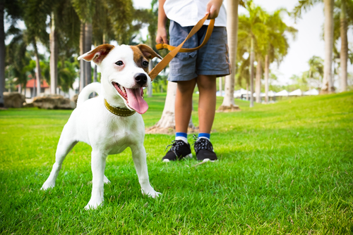 Why Hire Us As Your Dog Walker?
