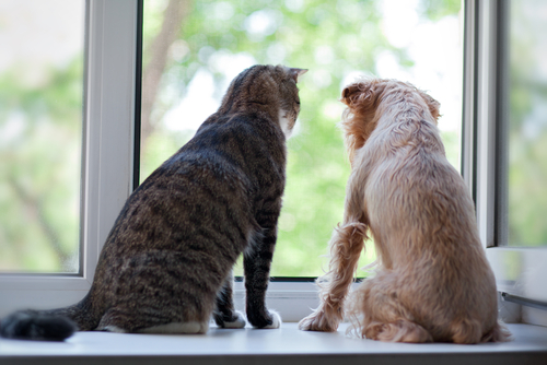 Is a Dog or Cat Easier to Take Care of?